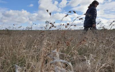 Ajax Road Grassland veg removal voted down